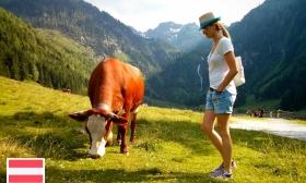 Alpesi nyaralás! 8 nap, 7 éjszaka 2 vagy 4 főnek többféle komfortfokozatban schladmingi vendégházban 63-68% kedvezménnyel
