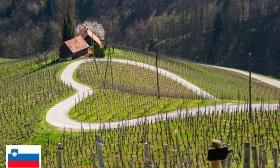 70.294 Ft helyett 41.990 Ft: Aktív nyaralás Szlovéniában - 3 nap 2 főnek félpanziós ellátással és extrákkal a négycsillagos Hotel Bellevue Mariborban, a Mariborsko Pohorje régióban